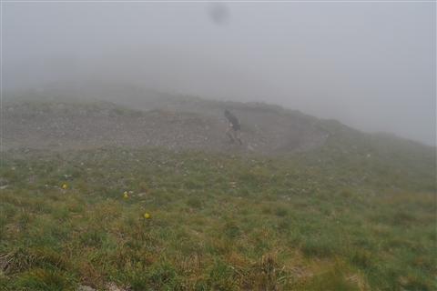 TRAIL di PIZZO San Michele N°3157 FOTO scattate a raffica in VETTA da Peppe Dalessio con nebbia e gran freddo - foto 379