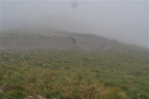 TRAIL di PIZZO San Michele N°3157 FOTO scattate a raffica in VETTA da Peppe Dalessio con nebbia e gran freddo - foto 383
