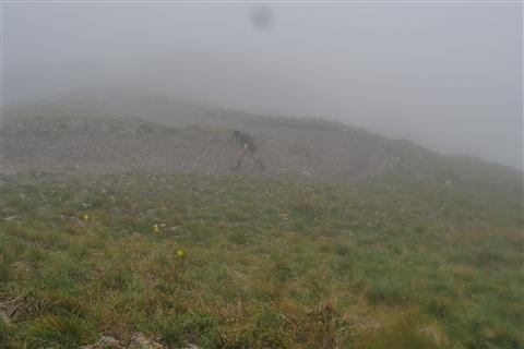 TRAIL di PIZZO San Michele N°3157 FOTO scattate a raffica in VETTA da Peppe Dalessio con nebbia e gran freddo - foto 385
