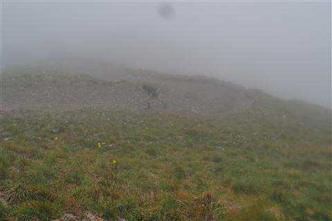 TRAIL di PIZZO San Michele N°3157 FOTO scattate a raffica in VETTA da Peppe Dalessio con nebbia e gran freddo - foto 386