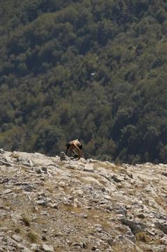 Positano Agerola Vertikal   6 settembre 2020 - foto 66